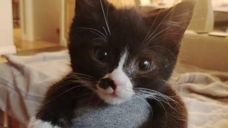 Rimasto orfano e in fin di vita viene salvato: il gattino non si separa più dai suoi soccorritori