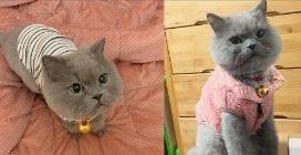 Muk e Goom, i gattini col maglioncino che fanno impazzire il web