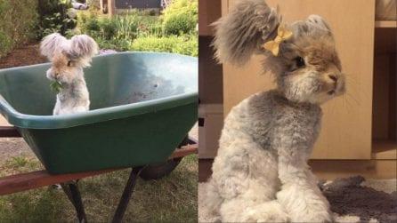Willy, il coniglietto con le orecchie più tenere che esistano