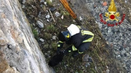 Scappa dai botti di capodanno, cagnolino salvato dai vigili del fuoco