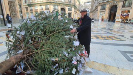Abbattuto l'albero di Natale in galleria Umberto: hanno tentato di tagliarlo