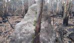 Australia, segni di speranza in un paesaggio completamente bruciato