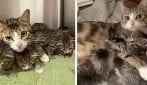 Mamma gatto e i suoi sei cuccioli ritrovati a bordo di un'auto sequestrata
