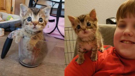 È minuscolo ma tenerissimo: il gattino salvato ama stare sulla spalla del suo nuovo padrone