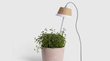 6 idee per creare l'orto in casa
