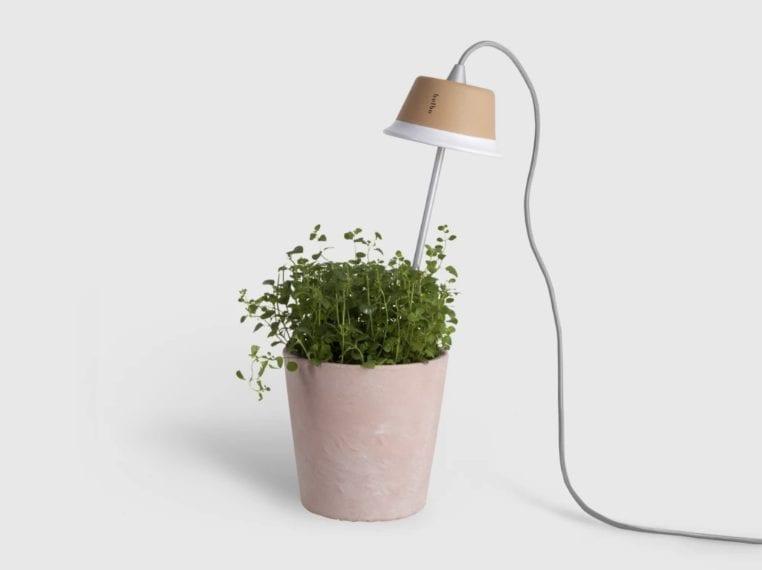 Cynara di Bulbo è una lampada a LED che consuma solo 7W di consumo e permette di accompagnare la crescita di piante aromatiche, ortaggi, legumi e fiori tutto l'anno.