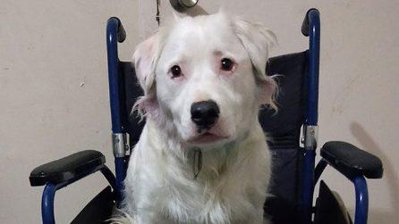 Questo cane è sordo e cieco ma ha un gran cuore: cura altri animali