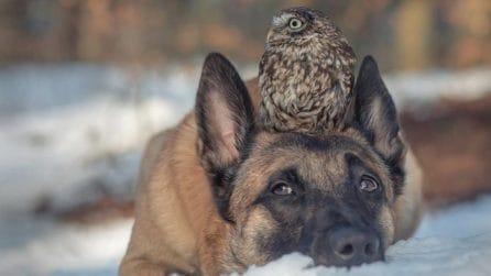 Amici per la pelle: Ingo e Poldi, il cane e la civetta inseparabili