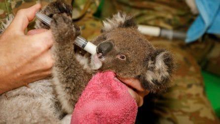 Nei loro giorni liberi coccolano i koala feriti dopo l'incendio: i soldati dal cuore grande