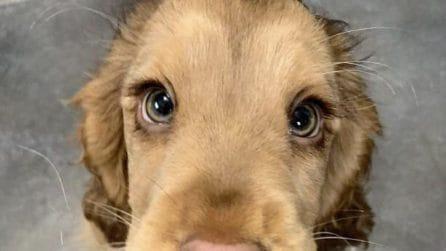Il cagnolino che ha gli occhi di una Principessa Disney
