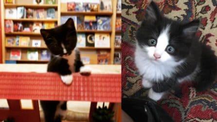 Una libreria speciale: i gattini che vagano tra i volumi possono essere adottati