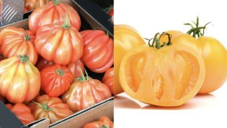 Pomodori rossi, gialli, tondi: le tante varietà di questo amatissimo alimento