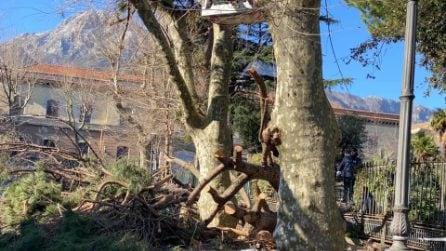 Maltempo a Salerno, uomo schiacciato e ucciso da un albero a Cava dei Tirreni