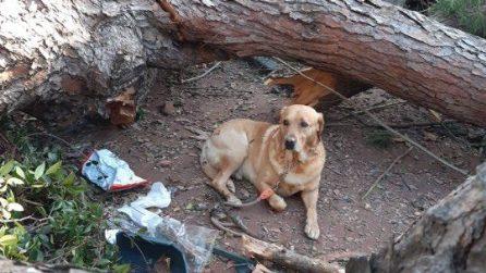 Cava de' Tirreni, albero schiaccia il padrone: il cane Charlie veglia fino alla fine