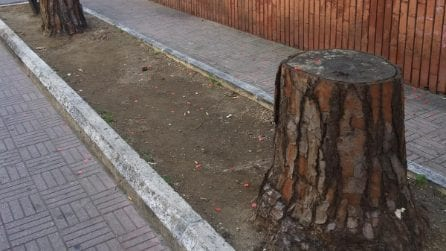 Colli Aminei, Napoli: viale dei Pini non ha più un albero