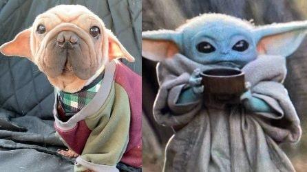 """""""Baby Yoda"""" salvato dal commercio di carne: la sua storia è commovente"""