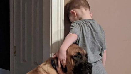 Mette il figlio in castigo: il cane non lo abbandona e resta vicino a lui