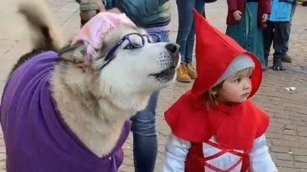 La piccola Agata e il suo cane Yanuk fanno impazzire i social