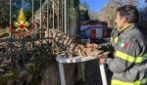 Capriolo resta incastrato in una ringhiera: i vigli del fuoco salvano l'animale