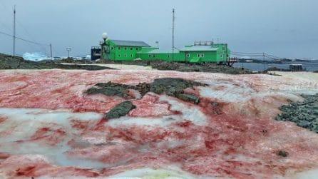 In Antartide la neve diventa rossa: ghiacciai colorati per colpa di un'alga
