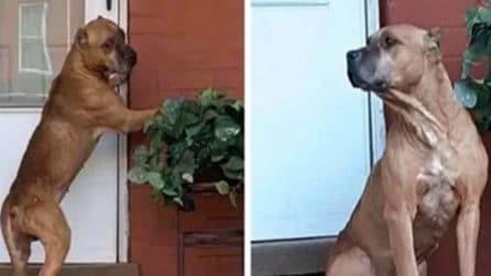 """La triste storia di """"Cupido"""", il cane che ha aspettato per settimane il ritorno dei suoi padroni"""