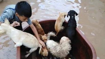 Dopo il nubifragio, questo bambino salva i cani mettendoli al sicuro in una bacinella