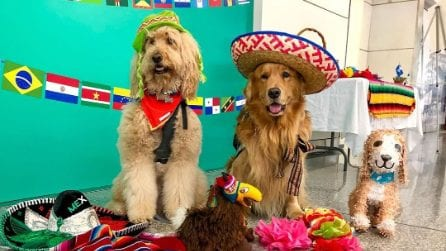 """L'aroporto che ha """"assunto"""" dei cani per tenere compagnia i viaggiatori nelle lunghe attese"""