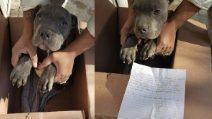 Bambino lascia il cucciolo fuori al rifugio per salvarlo dai maltrattamenti del padre