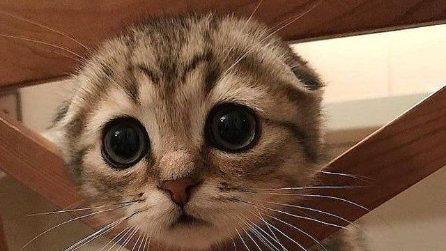 I gatti più dolci e teneri di Instagram