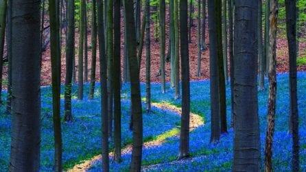 La magia della foresta blu che sembra uscita dalle fiabe: questo posto incantato esiste davvero