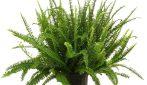 6 piante che migliorano l'aria di casa