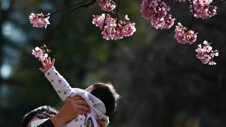 Giappone, la fioritura dei ciliegi ai tempi del Coronavirus