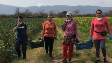 Coronavirus, la solidarietà degli immigrati: il raccolto nei campi a chi non ha soldi