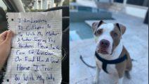 """Si riunisce alla famiglia durante il coronavirus, ma non porta il cane con sé: """"Prendetevi cura di lui"""""""