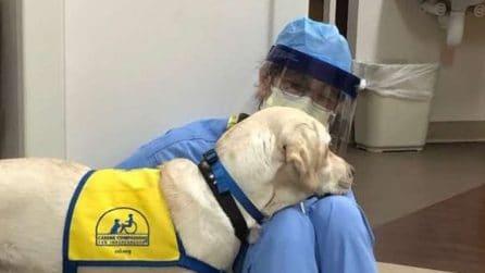 Coronavirus, il cane che conforta i medici stremati