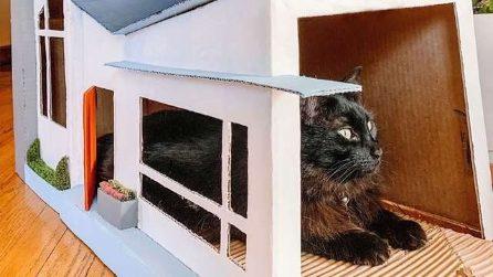 Usa delle vecchie scatole per costruire una casa per i suoi due gatti