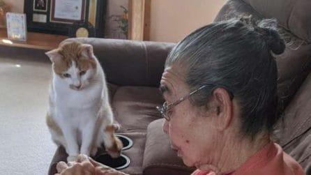 """Il gatto aspetta impaziente che la nonnina """"curi"""" il suo migliore amico"""
