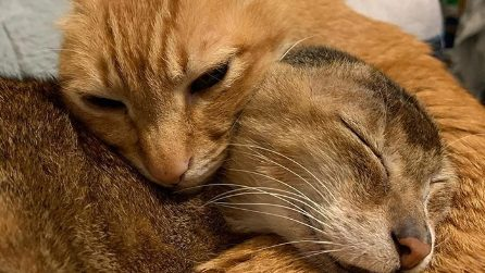 Ha perso le orecchie ma ha finalmente trovato casa e un migliore amico