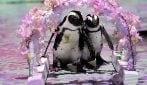 L'acquario è chiuso: due pinguini protagonisti di un video promo