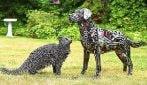 Cani e gatti in metallo: le meravigliose sculture con materiale riciclato