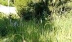 'Erba alta e forasacchi, inservibile': il Parco Viviani ha riaperto ma è come se fosse chiuso