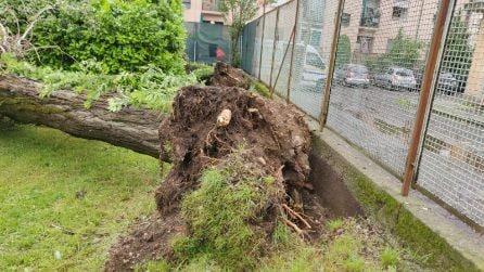 A Milano i danni del maltempo: alberi sradicati, auto distrutte e cavi tranciati