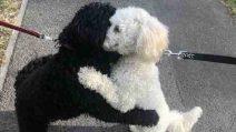 Non si vedevano dalla nascita: dopo un annosi incontrano e si abbracciano amorevolmente