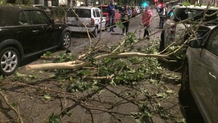 Roma, cadono rami e alberi a Parioli e Flaminio: danneggiate cinque auto in sosta