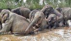 Elefanti sfruttati per turismo tornano in libertà: le toccanti immagini