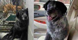 Triste e abbattuto: il cane non smette più di ridere quando capisce di essere stato adottato