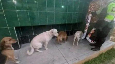 Cani affamati e assetati aspettano in fila davanti ai distributori installati dalla polizia