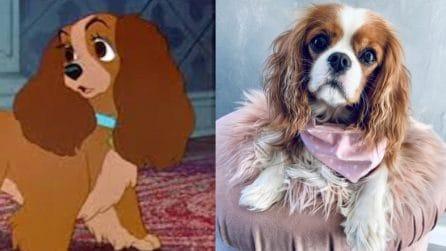 Orecchie lunghe e sguardo tenero: com'è la cagnolina Lilly nella realtà