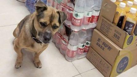 Il padrone è morto da 3 mesi, ma il cane lo aspetta ancora fuori l'ospedale