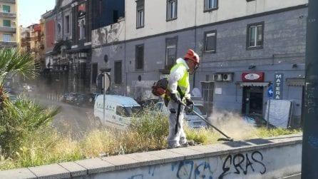 NapoliServizi pota le aiuole e giardini pubblici in tutta la città